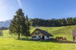 Alp, Alpaufzug, Alpen, Alpfahrt, Alps, Appenzell, Appenzell Ausserrohden, Brauchtum, Frühling, Haus, Hundwil, Hütte, Ostschweiz, Schweiz, Sennen, Spring, Suisse, Switzerland, Säntis, Tracht, Urnäsch, alps, tradition