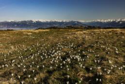 Appenzell, Frühling, Gais, Schweiz, Spring, Suisse, Switzerland
