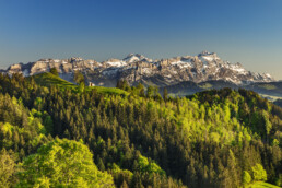 Alp, Alpen, Alps, Alpstein, Appenzell Ausserrohden, Aussicht, Gais, Ostschweiz, Schweiz, Suisse, Switzerland, Säntis, Wald