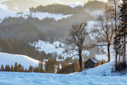 Abend, Appenzell, Appenzell Ausserrohden, Baum, Bäume, Bühler, Ostschweiz, Suisse, Switzerland, Tree, Trees, Trogen, Wald, Winter