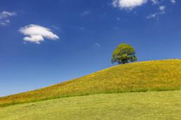 Appenzell, Appenzell Ausserrohden, Baum, Blumenwiese, Clouds, Frühling, Hundwil, Ostschweiz, Sonnenschein, Spring, Suisse, Switzerland, Wiese, Wolken