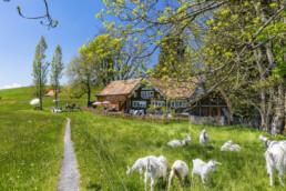 Appenzell, Appenzell Innerrhoden, Appenzeller Vorderland, Frühling, Heiden, Oberegg, Ostschweiz, Spring, Suisse, Switzerland, Verkehr, Wanderweg, Weg