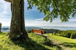 Appenzell, Appenzell Ausserrohden, Aussichtsbank, Bank, Baum, Bodensee, Ostschweiz, Rehetobel, Sommer, Suisse, Switzerland, summer