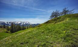 Appenzell, Appenzell Ausserrohden, Blumenwiese, Frühling, Gais, Ostschweiz, Schweiz, Spring, Suisse, Switzerland, Wiese
