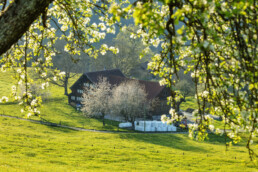 Appenzellerhaus, Baum, Frühling, Herisau, Ostschweiz, Schweiz, Spring, Suisse, Switzerland