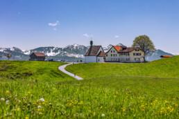 Appenzell Innerrhoden, Appenzeller Vorderland, Blumenwiese, Frühling, Oberegg, Ostschweiz, Schweiz, Spring, Suisse, Switzerland, Wiese