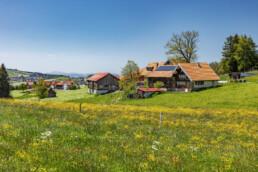 Appenzell Ausserrohden, Appenzeller Vorderland, Blumenwiese, Frühling, Ostschweiz, Rehetobel, Schweiz, Spring, Suisse, Switzerland, Wiese