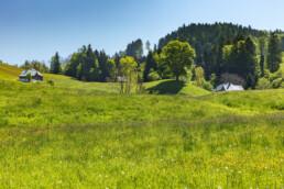 Appenzell, Appenzell Ausserrohden, Blumenwiese, Frühling, Ostschweiz, Schweiz, Spring, Suisse, Switzerland, Trogen, Wiese