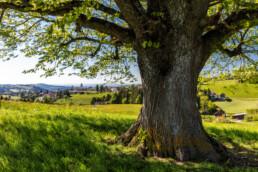 Appenzell, Appenzell Ausserrohden, Appenzeller Vorderland, Baum, Blumenwiese, Dorf, Frühling, Ostschweiz, Schweiz, Spring, Suisse, Switzerland, Wald, Wald AR, Wiese