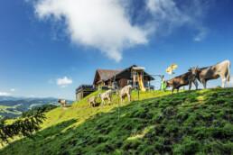 Appenzell, Appenzell Ausserrohden, Schweiz, Schönengrund, Suisse, Switzerland