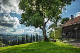 Appenzell, Appenzell Ausserrohden, Baum, Bäume, Clouds, Ostschweiz, Schweiz, Suisse, Switzerland, Tree, Trees, Wald, Wolken