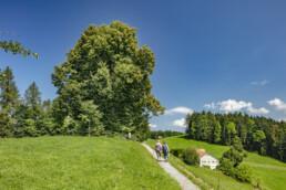 Appenzell, Aussichtsbank, Bank, Schweiz, Sport, Suisse, Switzerland, Teufen, Verkehr, Wandern, Wanderweg, Weg