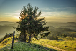 Appenzell, Appenzell Ausserrohden, Aussicht, Baum, Ostschweiz, Schweiz, Suisse, Switzerland, Tourismus, Urnaesch